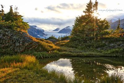 Arctic meadow with Salmon Glacier