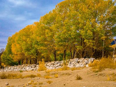 Fall colors of Big Bear