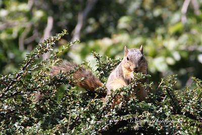 Squirrel looking forward