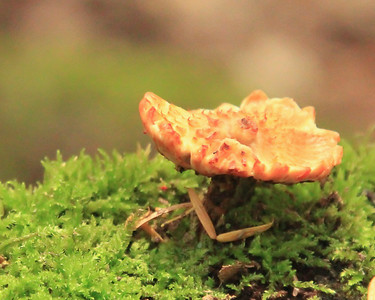 mushroom on a bed of moss