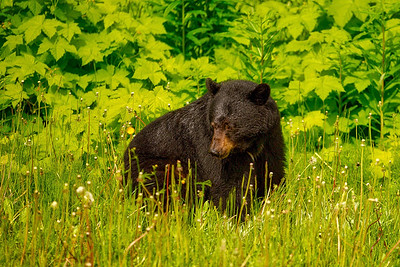 Bear in the bush.