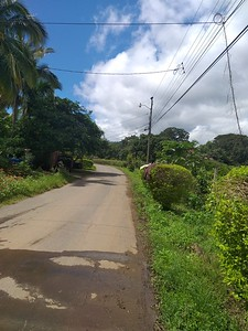 """""""Country Lane"""" end of Avenida 8"""