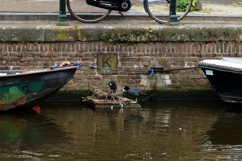 Birds in the Canal