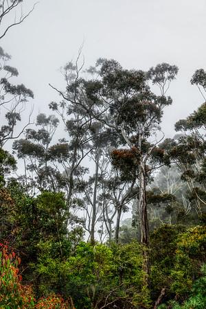 Blue Mountains - NSW - Australia