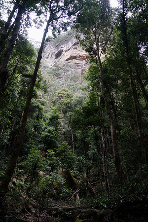 Trees and Rock in The Blue Mountains