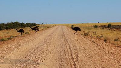 Emu Crossing