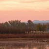 Bosque del Apache, NM<br /> 11/2017