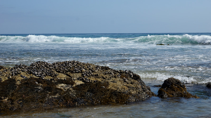 Beach at Crystal Cove State Park