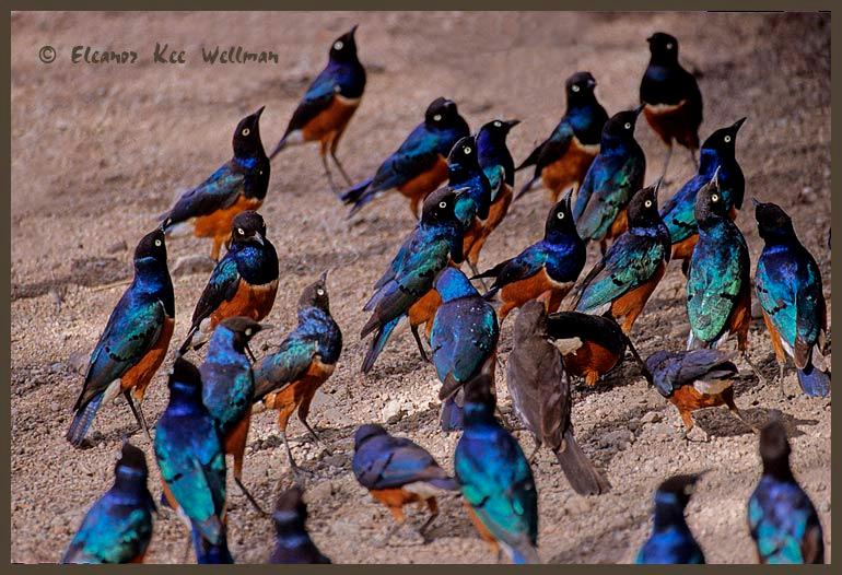Superb Startling Flock
