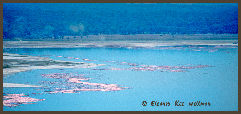 Flocks of Lesser Flamingos on Lake Nakuru