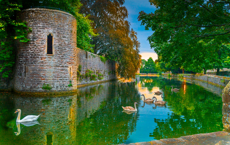 Swans at Bishop's Palace, Wells