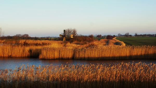 Fehmarn - Reeds