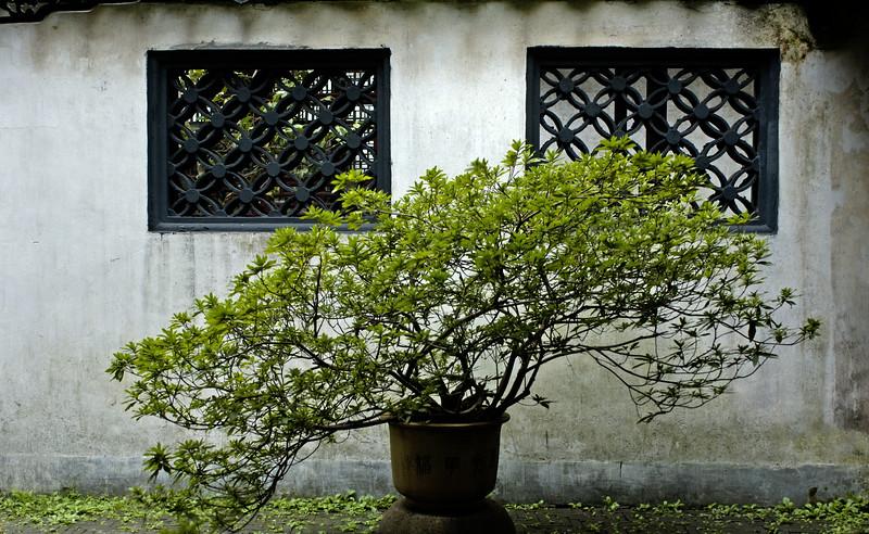 Bush, Yuyuan Gardens, Shanghai