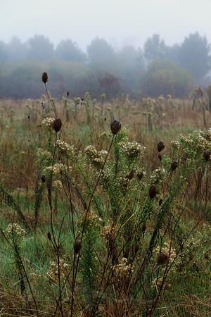 Field in Mist