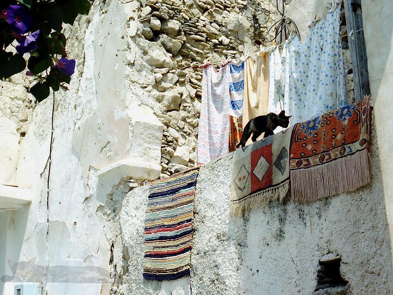 Cat in Naxos