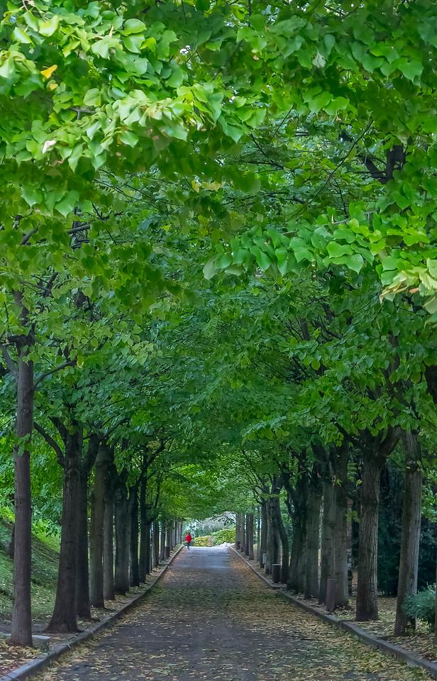 Viale Gennari, Sirmione, Lombardy, Italy