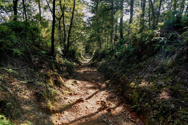 Kumano Kodo Trail in Kii Mountains, Japan