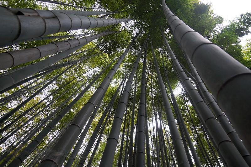Bamboo in Arashiyama