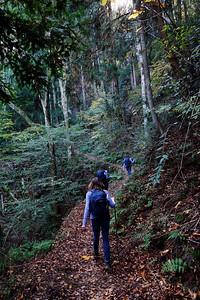 Mountain trail Near Koyasan