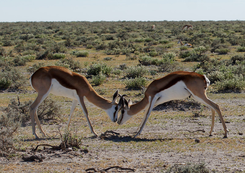 Head to Head in Namibia