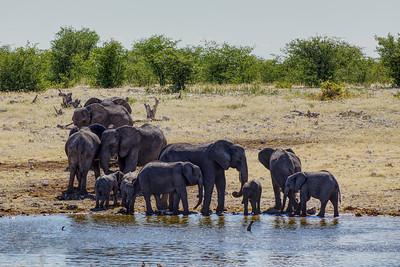 Elephants at a Waterhole in Etosha