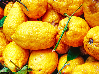 Lemons in Sicily