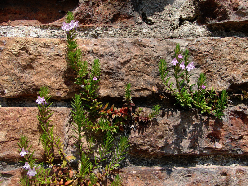 Plants in a Wall