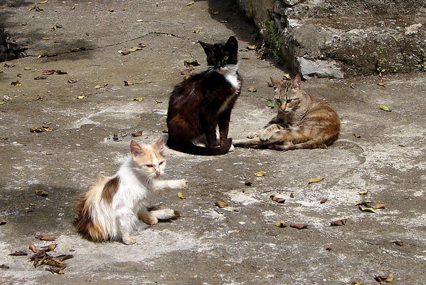 Feral Cats in Sicily