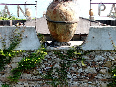 Cat, Pot, Flowers - Sicily