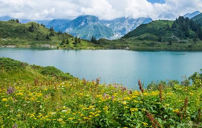 Trubsee Lake Wildflowers