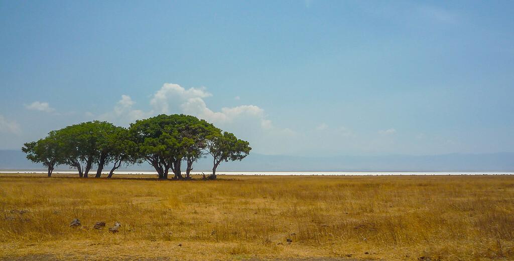 Ngorongoro Salt Flats 1