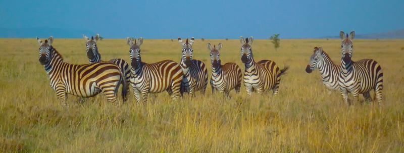 The Girls, Serengeti National Park