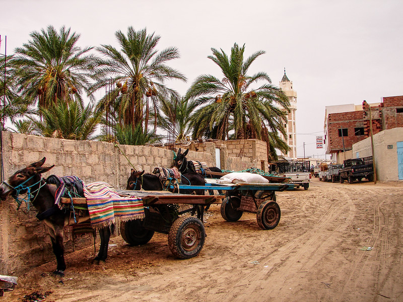 Donkeys and Carts - Tunisia