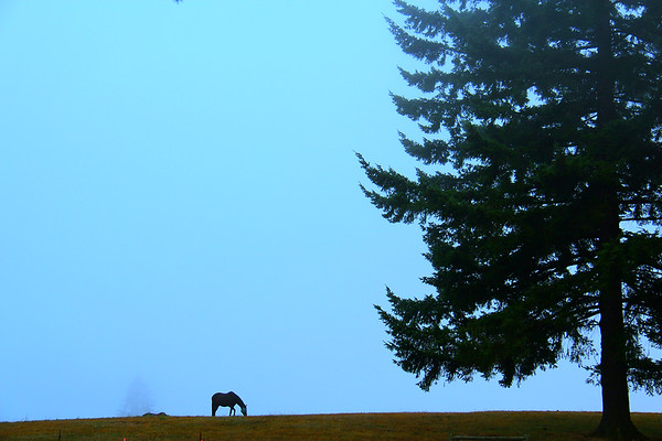 Grazing, Sandy, Oregon