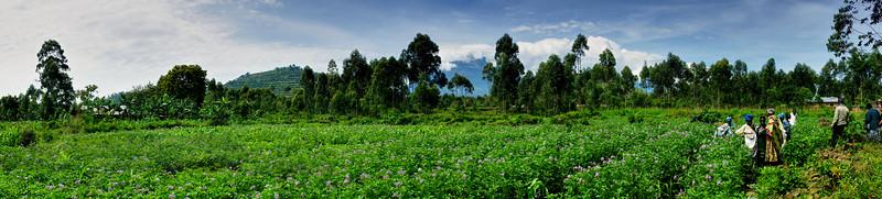Batwa People's Fields near Kisoro