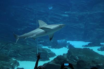 Shark in the Big Tank