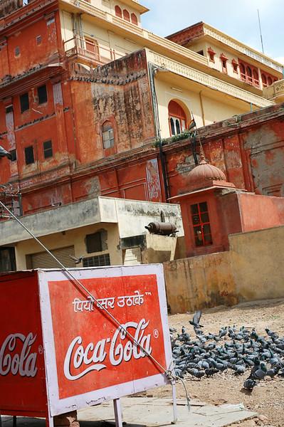 Pigeons <br /> -Jaipur, India