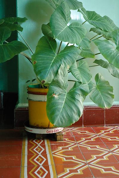 Plant Saucer<br /> -Hidalgo Del Parral, Mexico