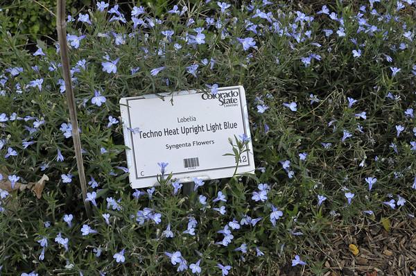 Lobelia Techno Heat Upright Light Blue