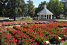 CSU flowertrials geraniums and gazebo