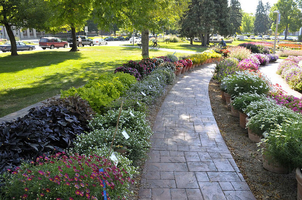 CSU flowertrials, view along a walk