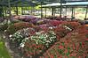 CSU flowertrials, impatiens, 70% shade area