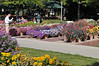 CSU flowertrials taking pictures