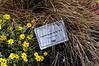 Carex Graceful Grasses Toffee Twist