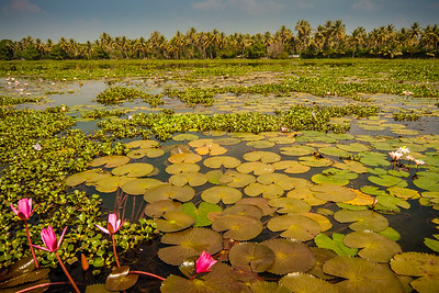 Vembanad Lake I