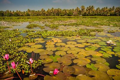 Vembanad Lake