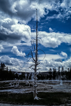 Dead tree and bird