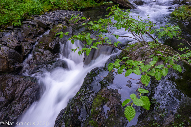 Success Creek, Olympic National Park, Washington State, May 2019
