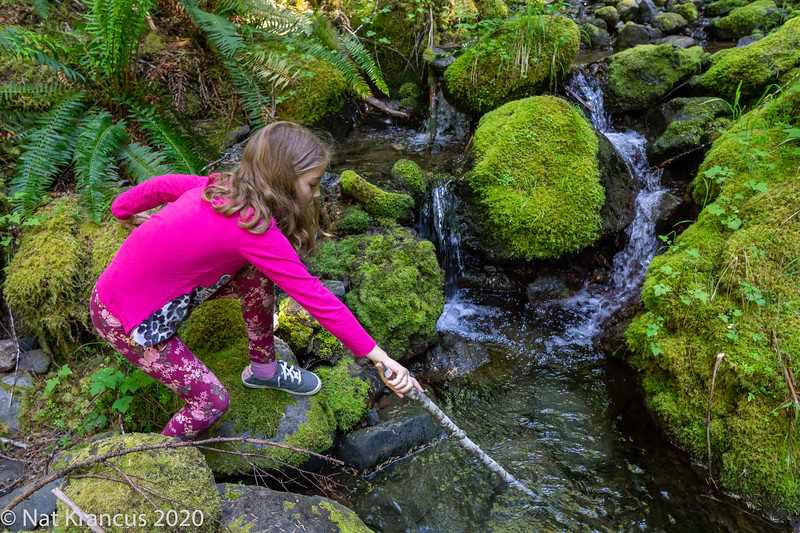 Playing Around the Big Quilcene River, Washington State, June 2019