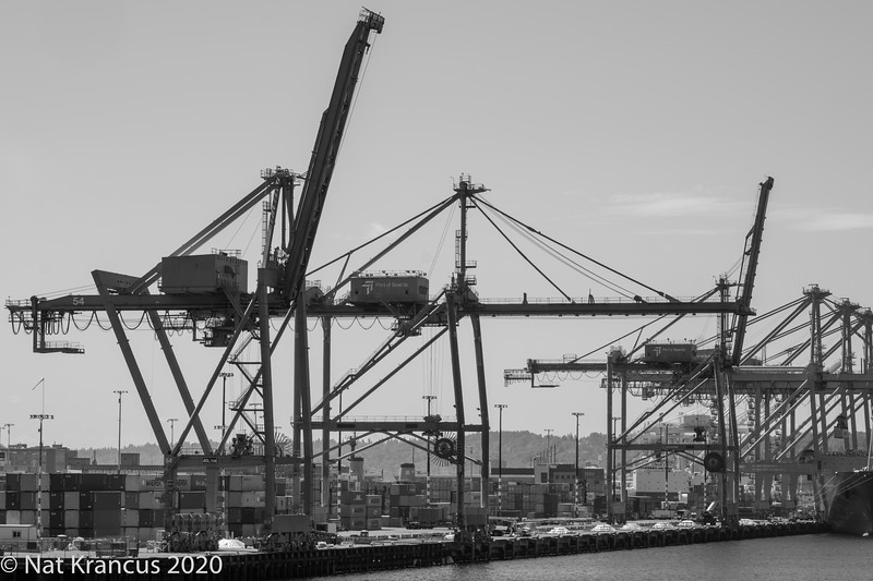 Cranes, Seattle, July 2018
